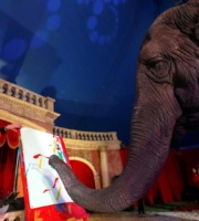 elefant picteaza