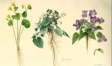 Flora salbatica a Transilvaniei, proiect sustinut de printul Charles, in premiera la Muzeul National de Arta al Romaniei